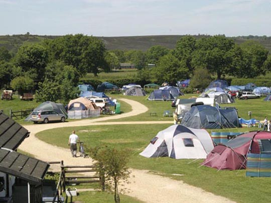 New Forest Campsites Now Open